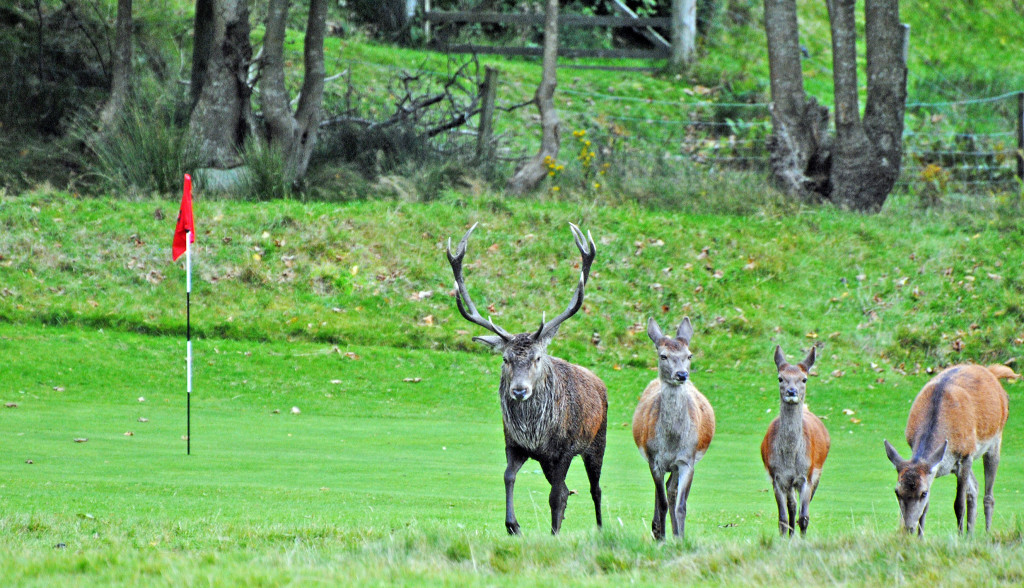 Deer on Arran 2012. Published in middle pages of Daily Record 2012