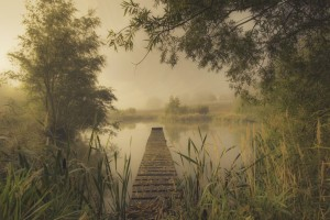 Mist over Pond Photo by Maggie Ingram