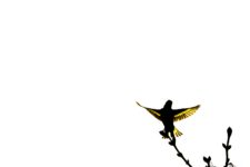2 Siskin Minimalist Photo by Maggie Ingram